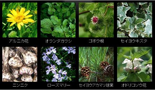 天然植物エキス