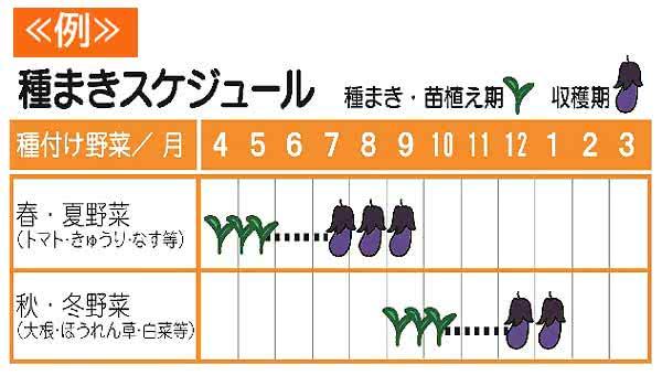 種付け野菜 月の表