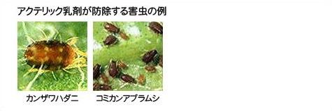 アクテリック乳剤が防除する害虫の例