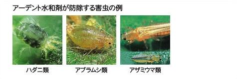 アーデント水和剤が防除する害虫の例