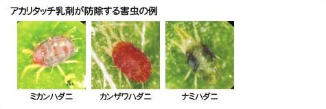 アカリタッチ乳剤が防除する害虫の例