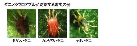 ダニメツフロアブルが防除する害虫の例