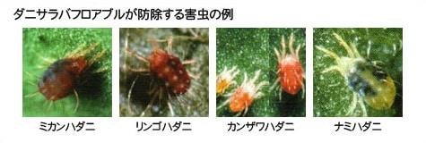 ダニサラバフロアブルが防除する害虫の例