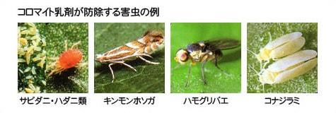 コロマイト乳剤が防除する害虫の例