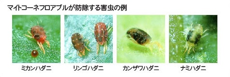 マイトコーネフロアブルが防除する害虫の例