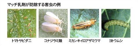 マッチ乳剤が防除する害虫の例