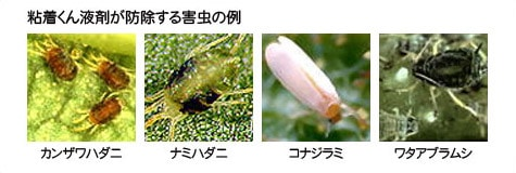 粘着くん液剤が防除する害虫の例