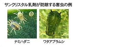 サンクリスタル乳剤が防除する害虫の例