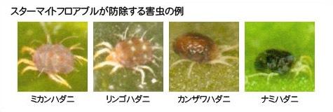 スターマイトフロアブルが防除する害虫の例