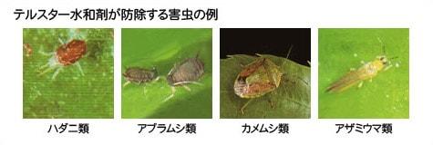 テルスター水和剤が防除する害虫の例
