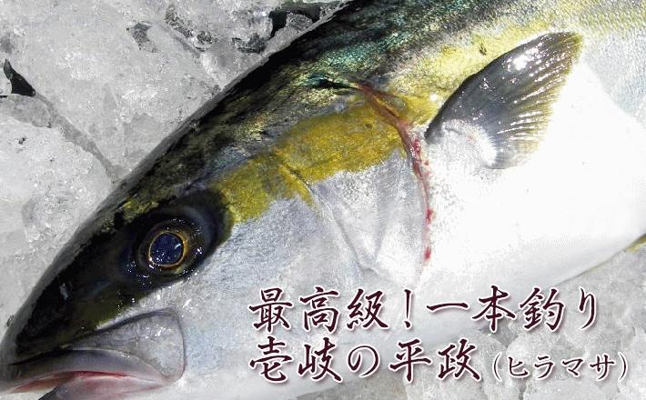 最高級!一本釣り 壱岐の平政(ヒラマサ)