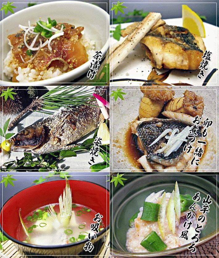 壱岐産天然イサキは煮物・焼き物・ソテー・茶漬けなども人気