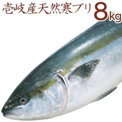 壱岐産天然寒ぶり8kg