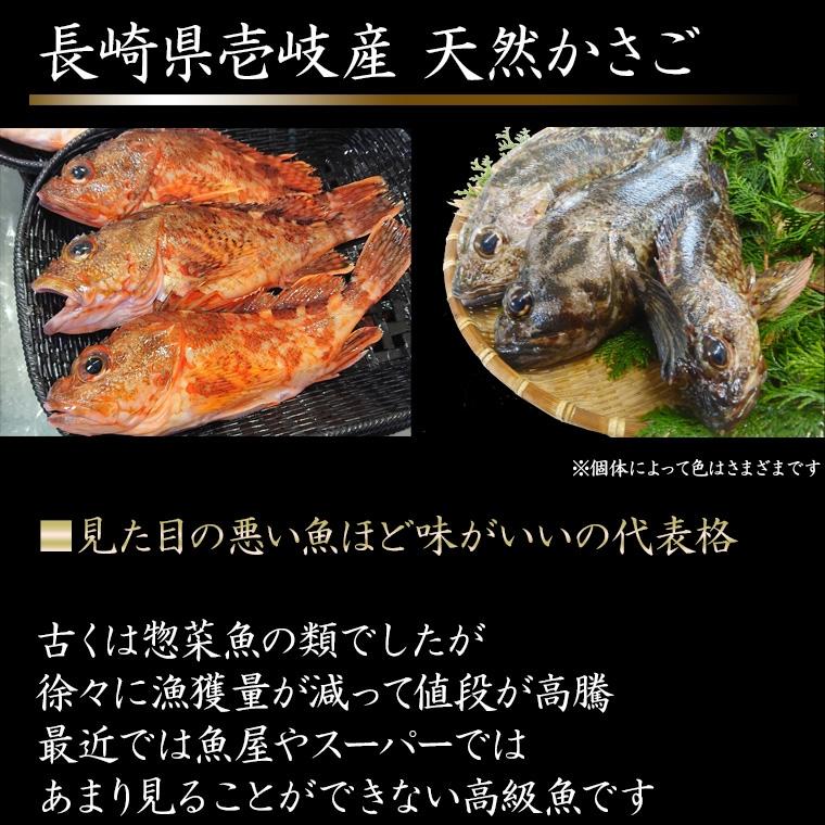 壱岐 長崎 天然かさご 1kg(2-5匹)送料込
