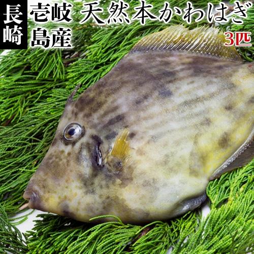 鮮魚かわはぎ冷凍