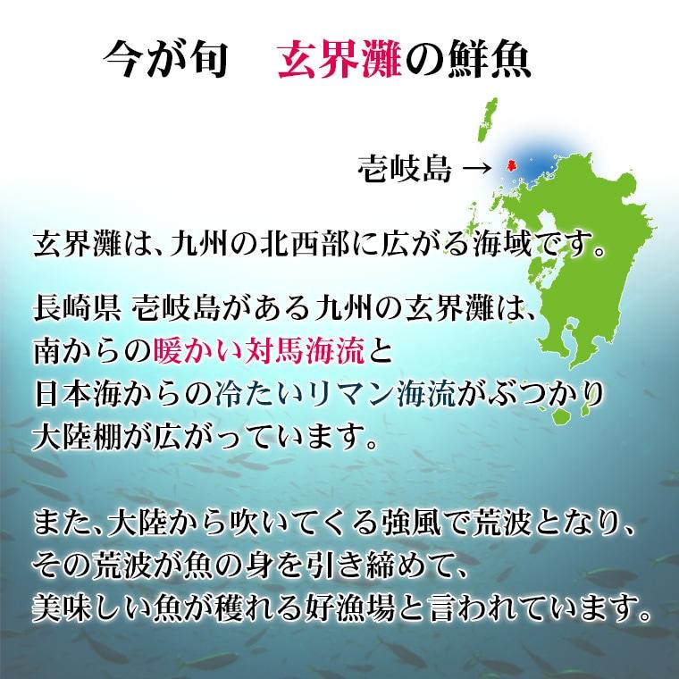 玄界灘は、南からの暖かい対馬海流と日本海からの冷たいリマン海流がぶつかり、大陸棚が広がっています