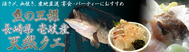 幻の高級魚!魚の王様 長崎県壱岐産「天然クエ」