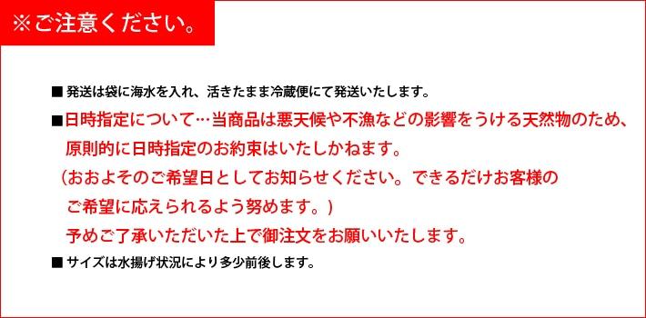 長崎県壱岐産なまこ ご注意ください