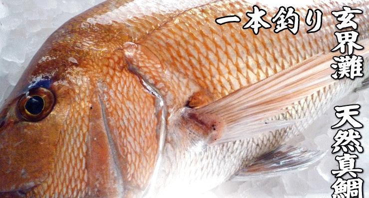 一本釣り 玄界灘 天然真鯛