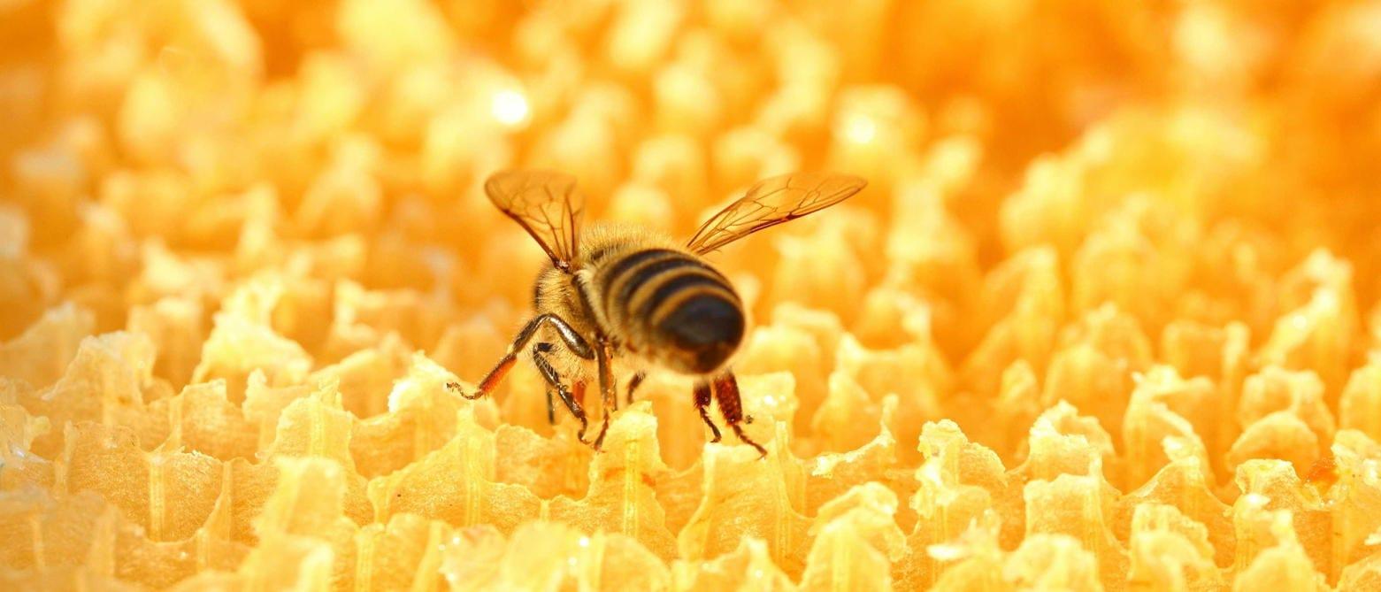 グリーンプロポリスの特徴 (2)蜂の種類