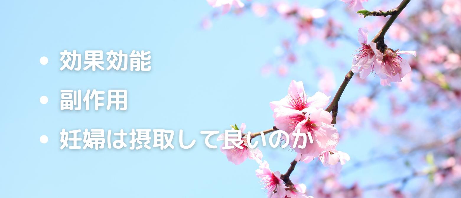 桜の花の効果効能、副作用、妊婦は摂取して良いのか