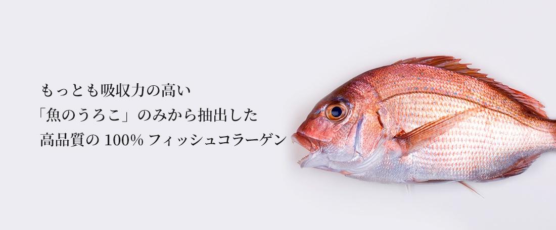 もっとも吸収力の高い「魚のうろこ」のみから抽出した高品質の 100% フィッシュコラーゲン