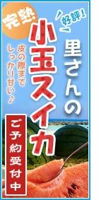 喜界島産小玉すいか(2個入り)