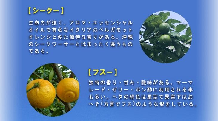 【シークー】生命力が強く、アロマ・エッセンシャルオイルで有名なイタリアのベルガモットオレンジと似た独特な香りがある。沖縄のシークワーサーとはまったく違うものである。【フスー】独特の香り・甘み・酸味がある。マーマレード・ゼリー・ポン酢に利用される事も多い。ヘタの緑色は星型で果実下はおへそ(方言でフス)のような形をしている。