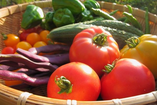 自分で育て野菜を収穫できる喜びがある