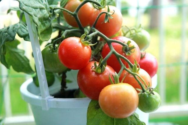 果物や野菜別で見た栄養素