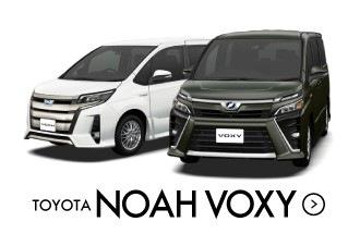 noah voxy