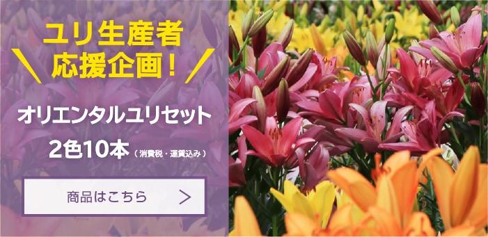 コロナ禍生産者応援価格 オリエンタルユリセット2色10本 (消費税・運賃込み)