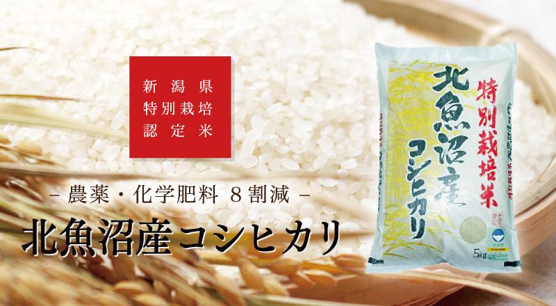 特別栽培米8割減々 北魚沼産コシヒカリ