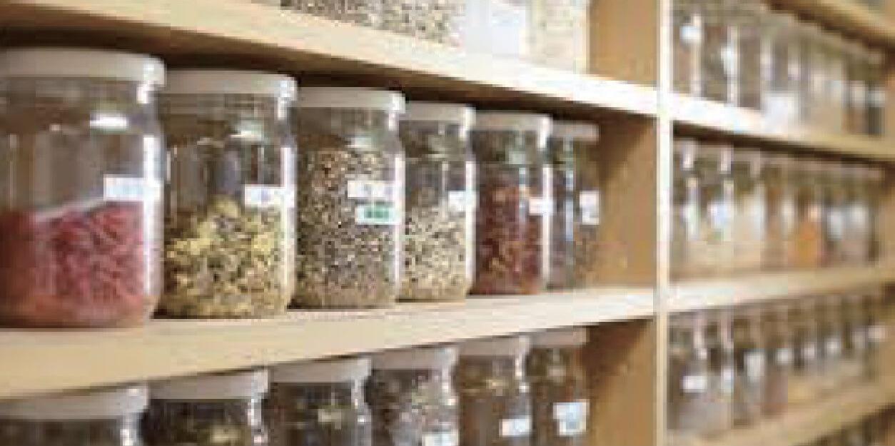 漢方医も信頼の健康きのこ・冬虫夏草漢方では更年期の女性に処方しています。