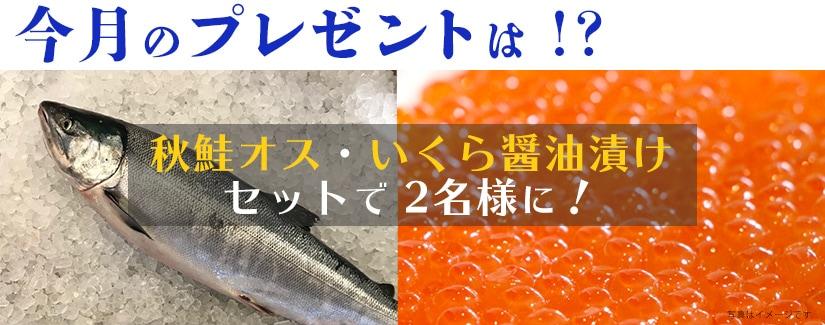秋鮭オス・いくら プレゼント