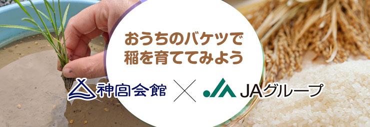 おうちのバケツで稲を育ててみよう! 神宮会館×JAグループ