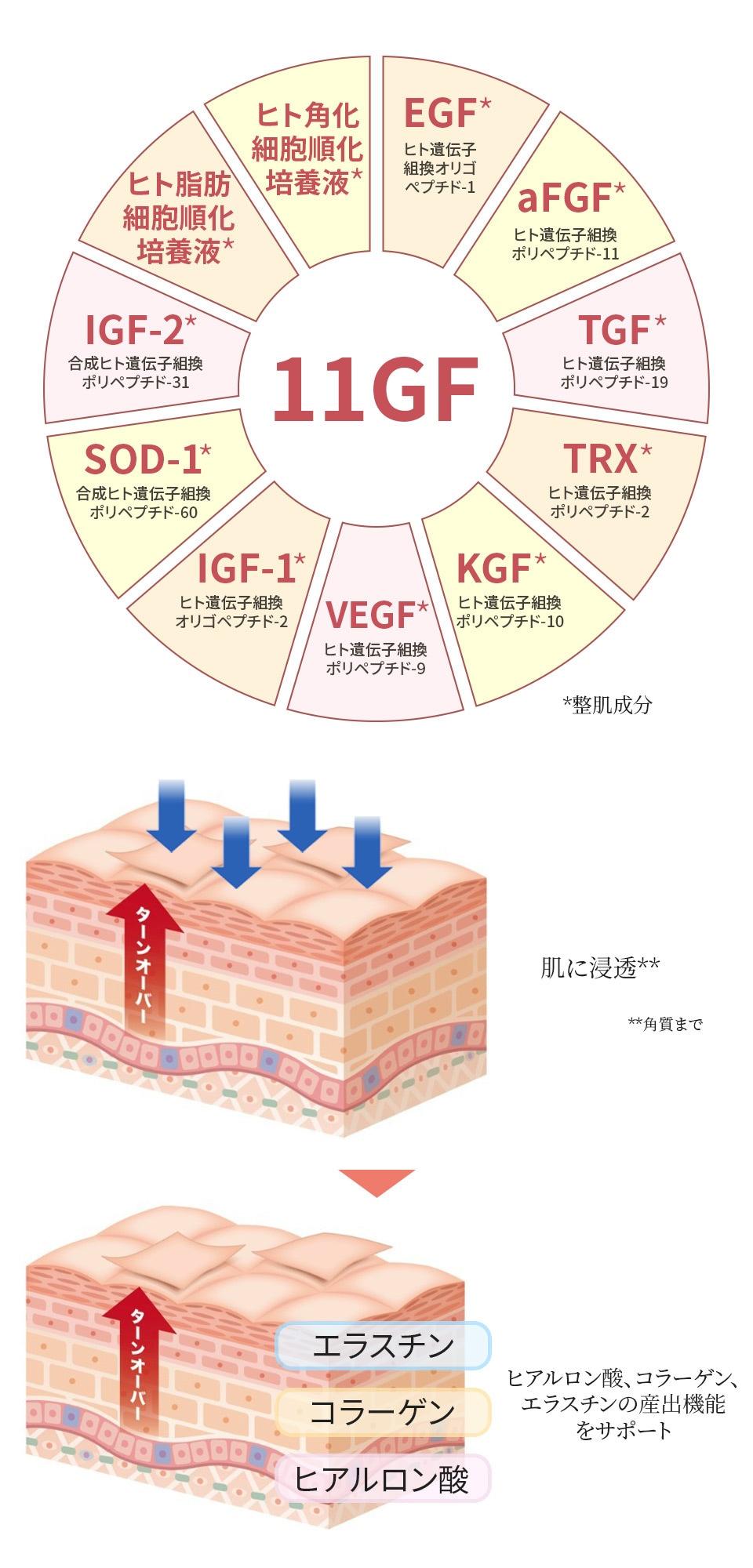 ヒト脂肪細胞順化培養液、ヒト角化細胞順化培養液配合高濃度ペプチド美容液
