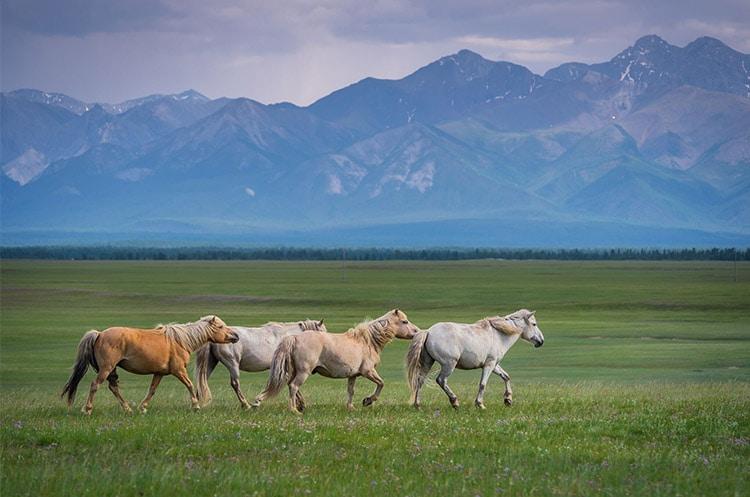 発酵熟成高濃度馬プラセンタ原液はモンゴル産の馬から抽出した原液美容液