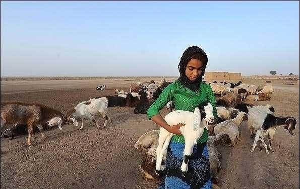 羊の面倒をみる少女