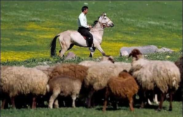 羊を追う男