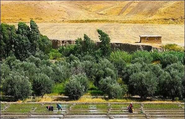 農業に勤しむ女性