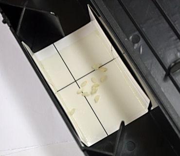 新ねずみ捕獲器くっつきマウスくっつきマウス専用替えシート