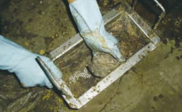 株式会社ピオニーコーポレーション グリーストラップ洗浄液 OP-62