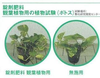 錠剤肥料観葉植物用 約70錠×40缶/ケース