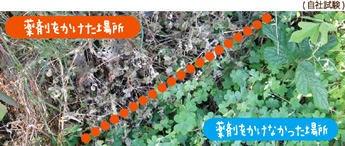 アースガーデン みんなにやさしい除草剤 おうちの草コロリ ジョウロヘッド