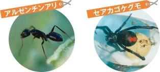 大日本除虫菊株式会社 ムカデ・アリコナーズ パウダー
