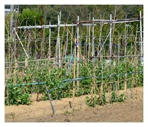 土面に散布する場合 1平方メートル当たり大さじ1〜2杯を目安に散布する。