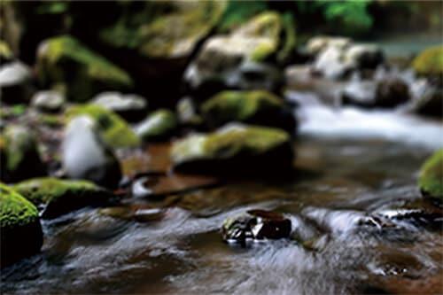 夷守の湧水の写真