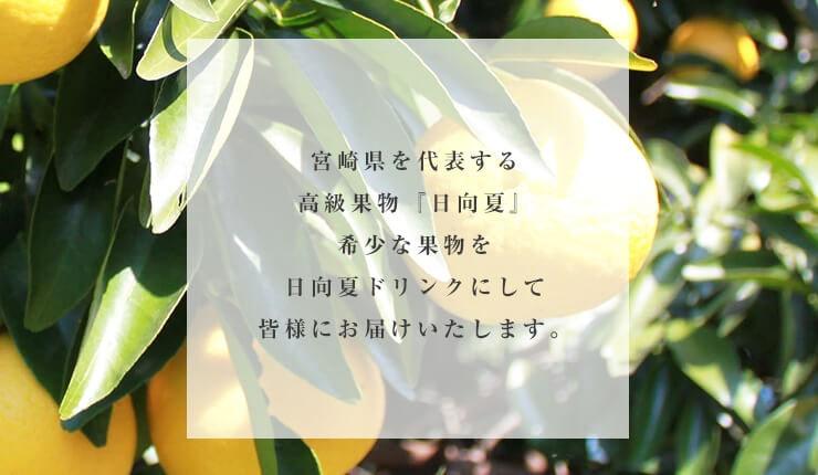 宮崎県を代表する果物日向夏