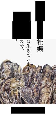 生きている牡蠣